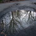 Puddle_trees